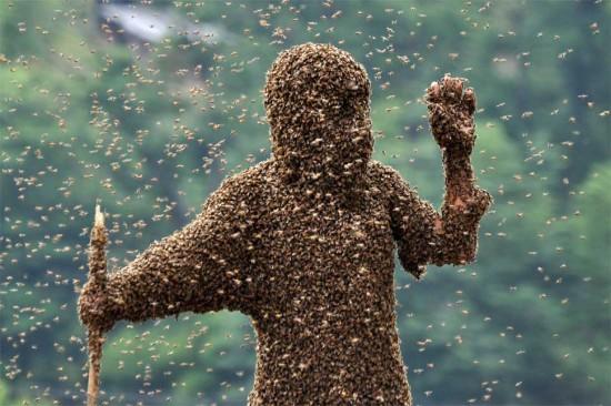ارتداء النحل في الصين .. مسابقة عجيبة يتمتع أصحابها بلسعات النحل اللذيذة