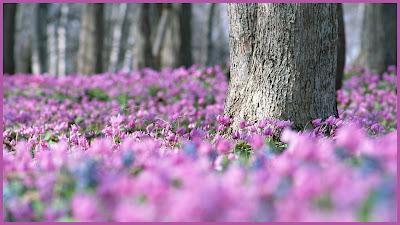 Penhaligon`s - Ellenisia. Artemisia. Lily&Spice
