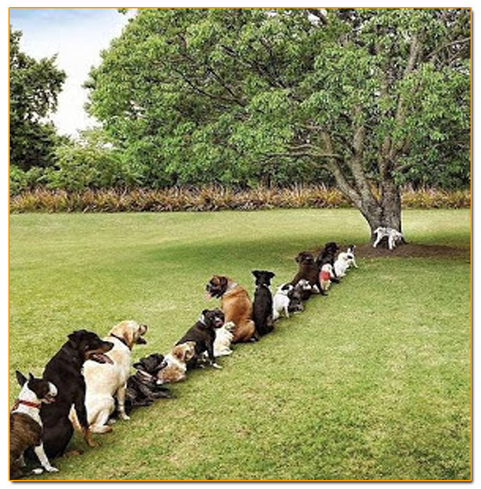 Dog Bathroom Queue
