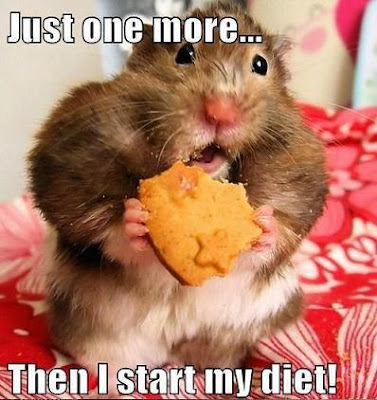 Fluffy hamster says, just one more then I start my diet!