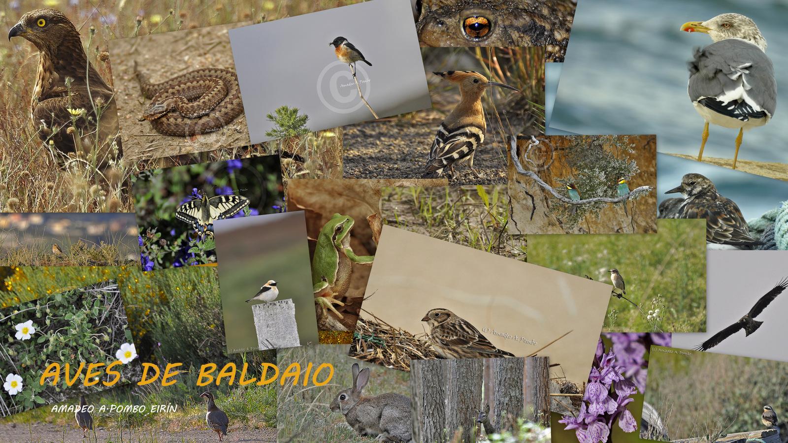 Aves de Baldaio