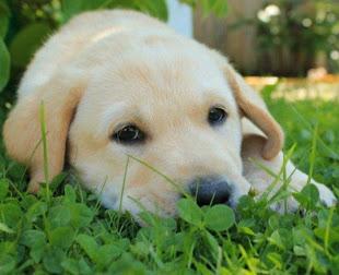Vår änglahund Alvin, du var underbar