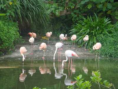 Taipei, Taiwan, Тайвань, Тайпей, зоопарк, фламинго, zoo, flamingo