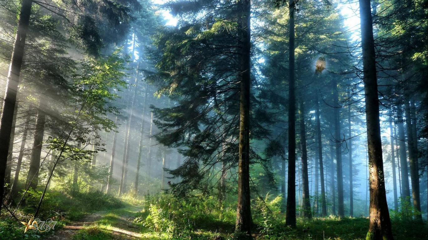 мелодия леса