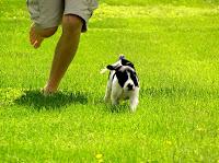 Como adestrar um cão hiperativo
