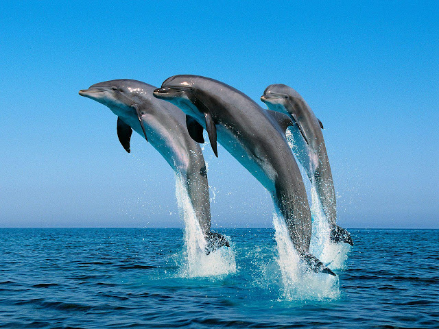 Thtee Dolphins