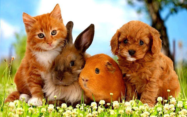 Kitten, puppy, rabbit and marmot sitting together