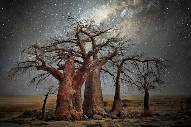 oldest trees beth moon diamond nights photography-7