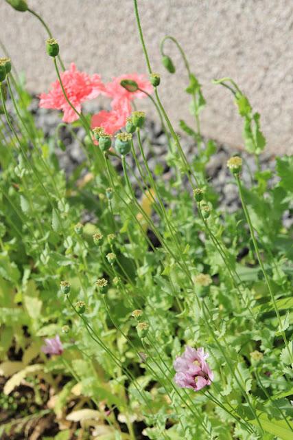 Unikot kukassa heinäkuussa