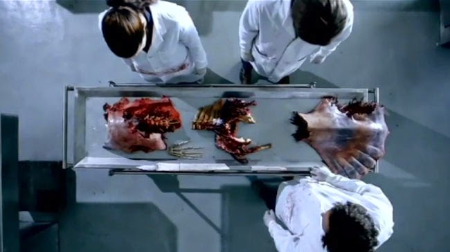 foto ikan hiu makan manusia - gambar binatang