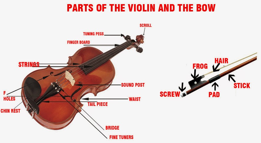 Partsof the Violin