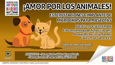 Amor por los animales, esterilización e implantación de microchips para mascotas