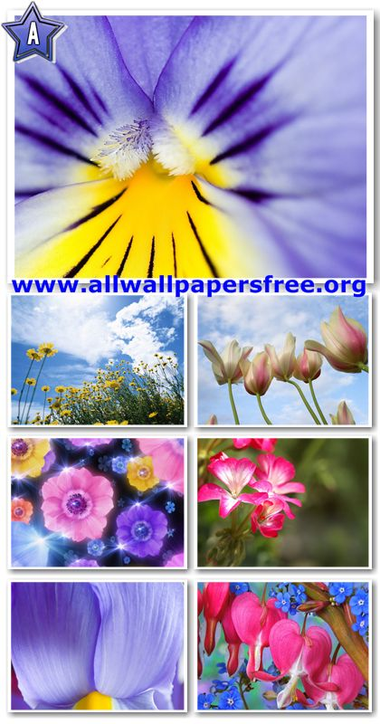 100 Beautiful Flowers Wallpapers 1280 X 1024 [Set 10]