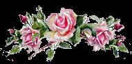 Amo Flores!