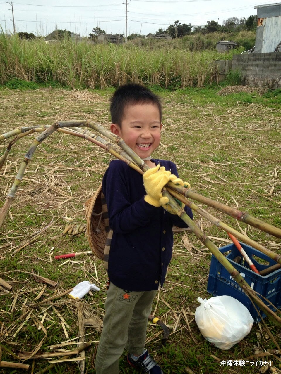 沖縄体験/観光 サトウキビ刈りとサトウキビかつぎ2