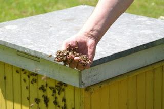 Pszczelarstwo Beekeeping fot. Dariusz Małanowski