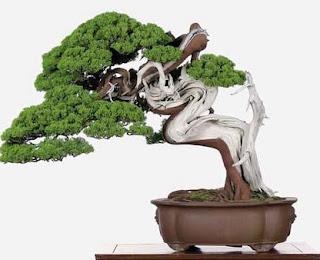 Tips Memilih Tanaman Yang Dapat Di Jadikan Bonsai