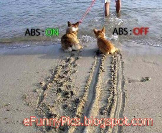 Dogs with and without ABS
