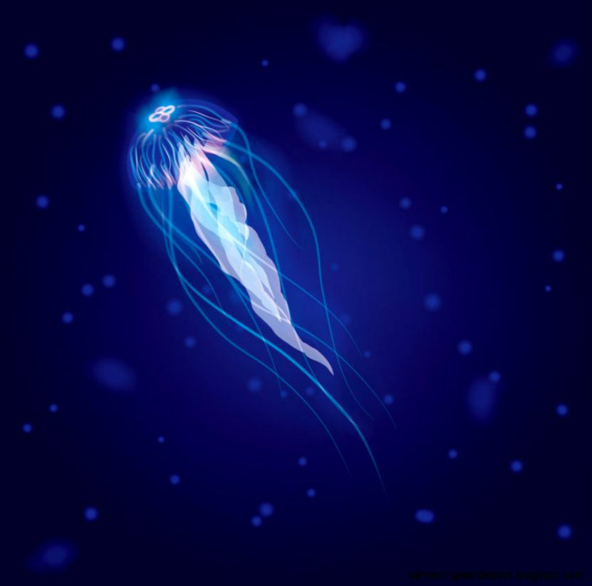 Glowing jellyfish wallpaper amazing wallpapers for Jellyfish wallpaper home