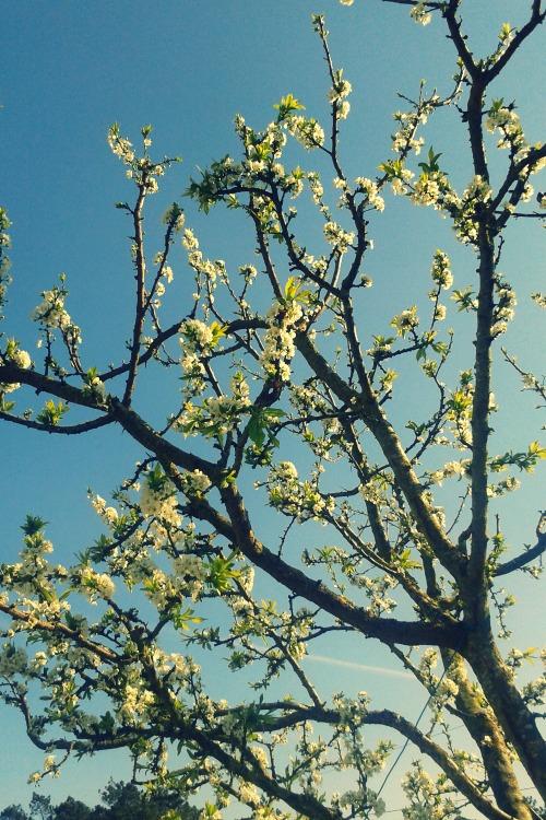 arbol con hojas floreciendo