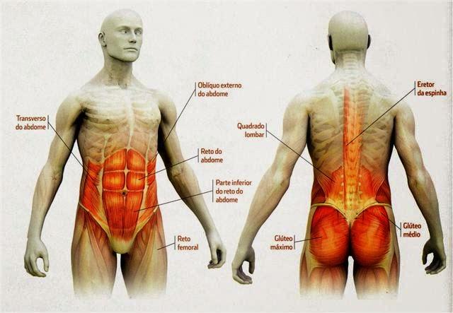 Musculatura del core