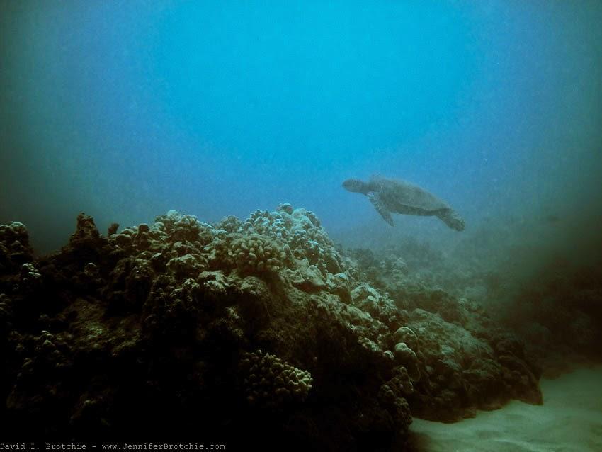 Best scuba snorkel Oahu