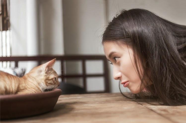 Kebaikan menjaga kucing