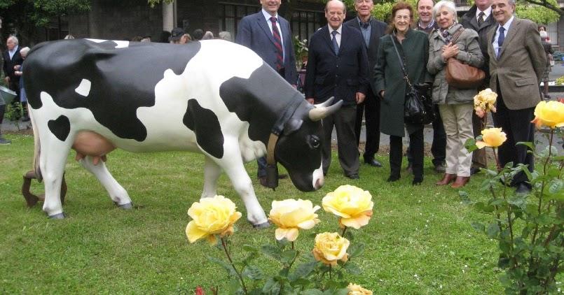 Barakaldo digital la vaca marimuu 39 pasea 39 por los for Vacas decorativas para jardin