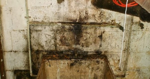 Basement Mold-What's Lurking Down There?