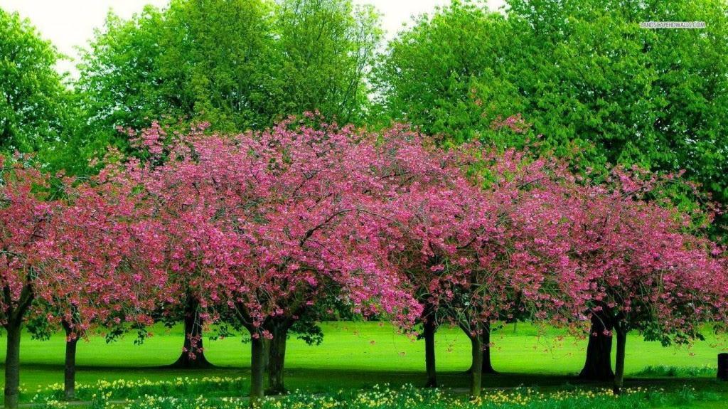 hình nền hoa cỏ mùa xuân cực đẹp