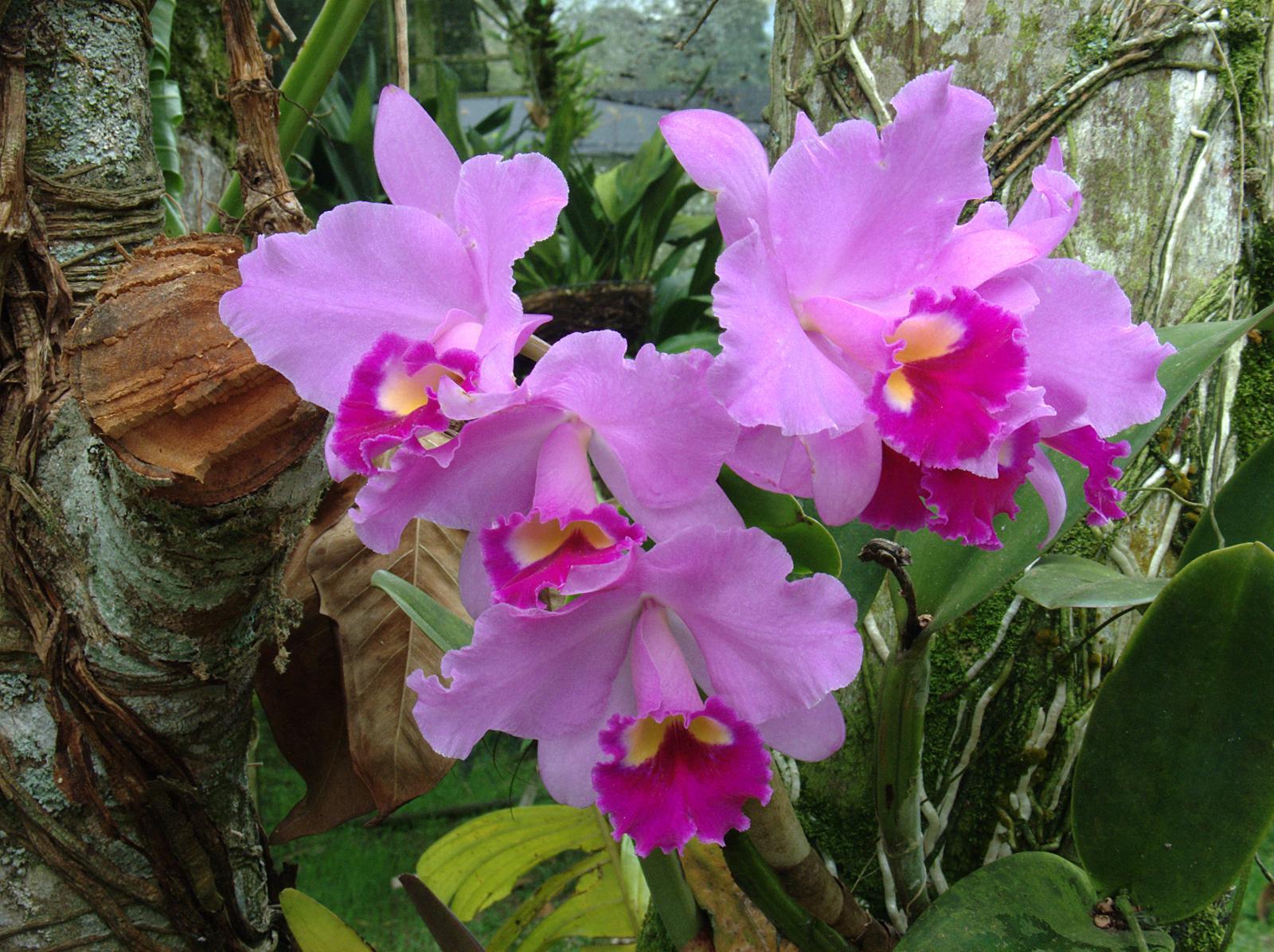 las orquideas : LAS ORQUIDEAS