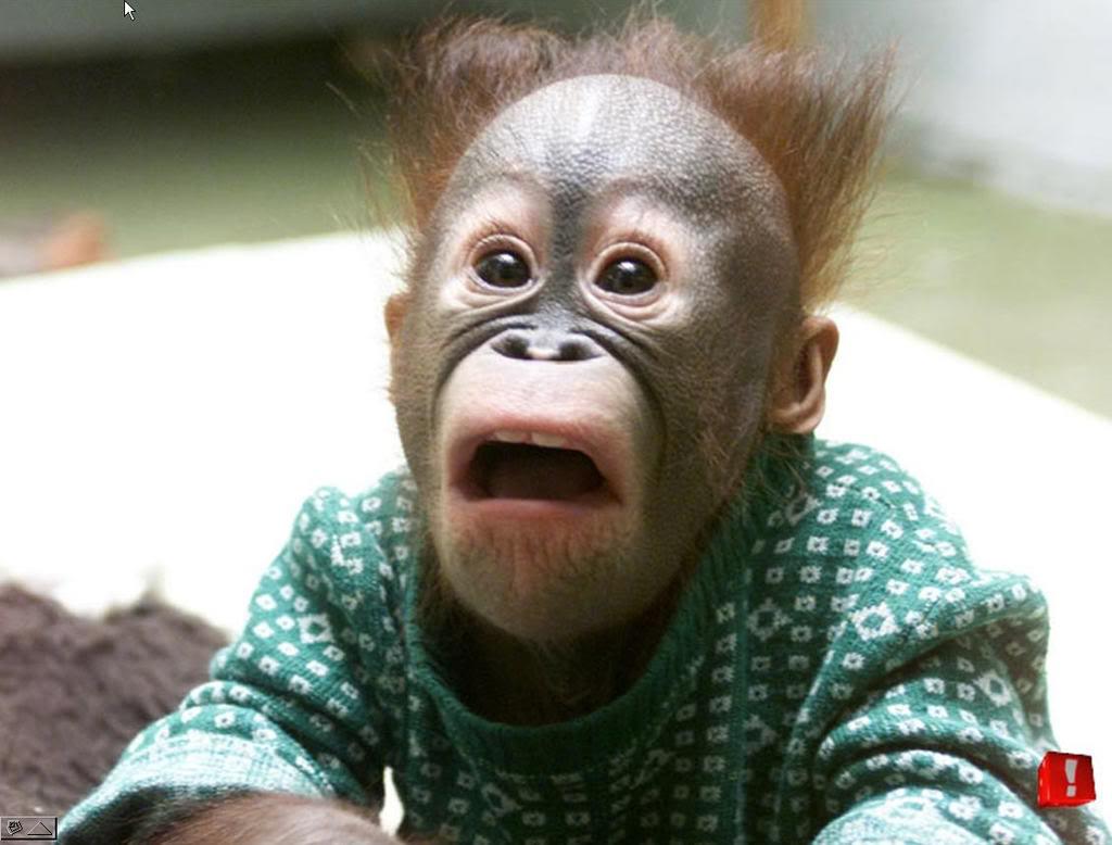 http://3.bp.blogspot.com/-n075BctioLo/TaSjgyiNnLI/AAAAAAAAAno/AsvHmDSCAXo/s1600/monkey-reaction-face.jpg
