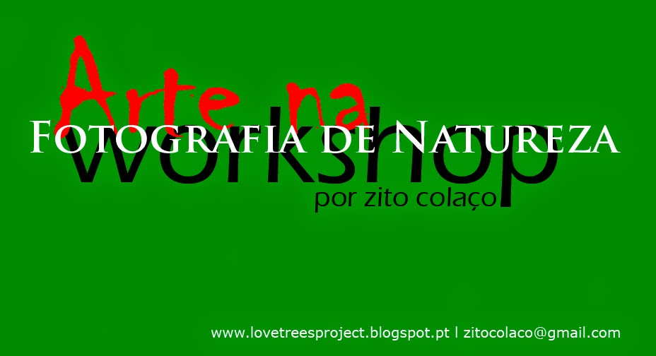 Arte na Fotografia de Natureza - Workshop
