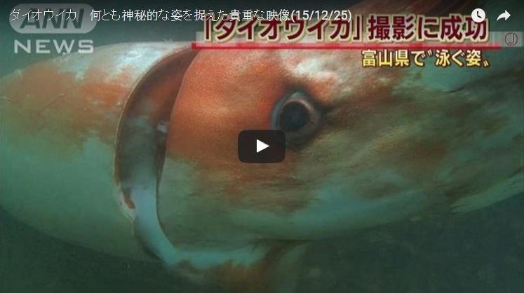 Sotong Gergasi Muncul Di Pelabuhan Jebun