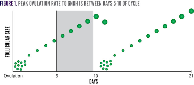 The peak ovulation rate to GnRH is between days 5-10 of the estrous cycle