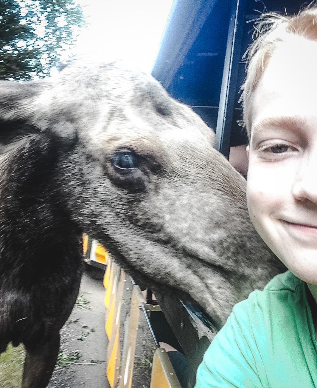 Selfie mit Elch!