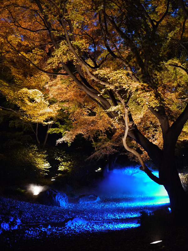 Fall Evening Illumination at Rikugien Gardens | November 22 - December 9, Tokyo