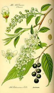 plantas y arboles del bosque mediterraneo