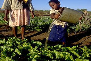 PRESIDENTE DE MOÇAMBIQUE REAFIRMA ATENÇÃO À QUESTÃO FUNDIÁRIA