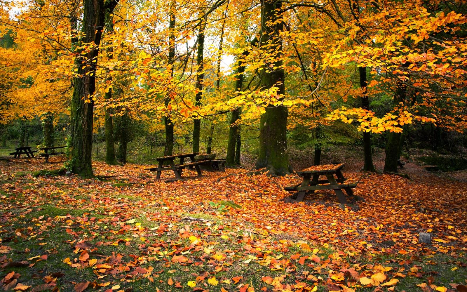 Красивые фото осени и кофе - de