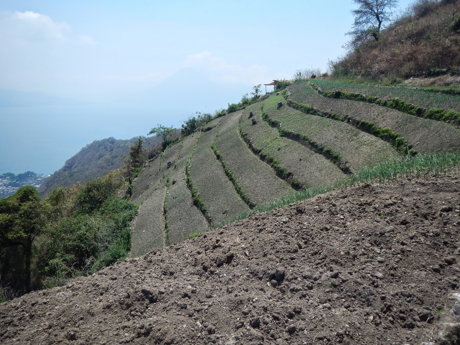 Mayan terrace farming production and usually images frompo for Define terrace farming