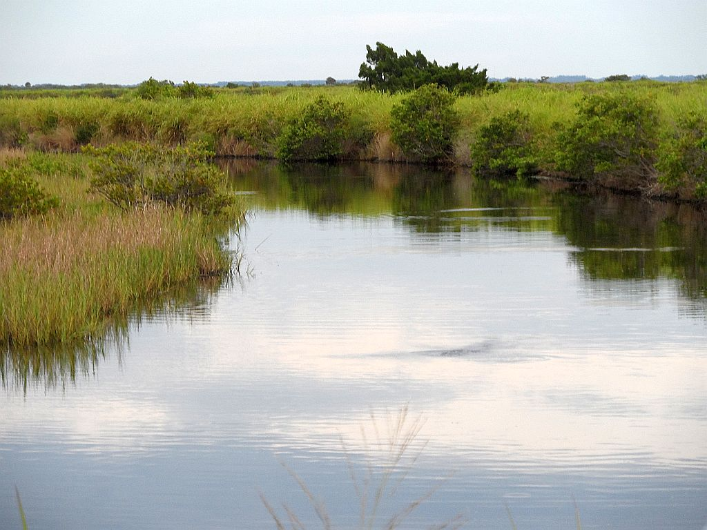 Mosquito lagoon indian river fishing the ditches are on for Indian river fishing