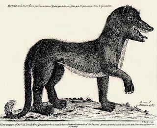 La Bestia de Gevaudan Gevaudanwolf