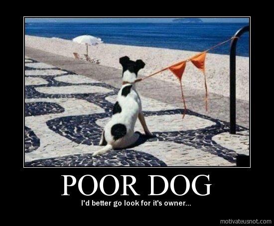 woof australia funny dog poster