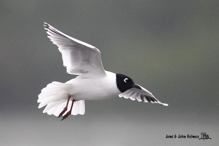 John's Hong Kong Birding: A promise of spring at Mai Po