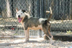 9/3/12 Is Lord Scruffington Dead or Alive? Please Contact Shelter to SAVE HIS PRECIOUS LIFE!