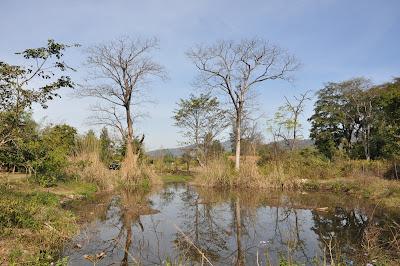 The Monsoon Jungle