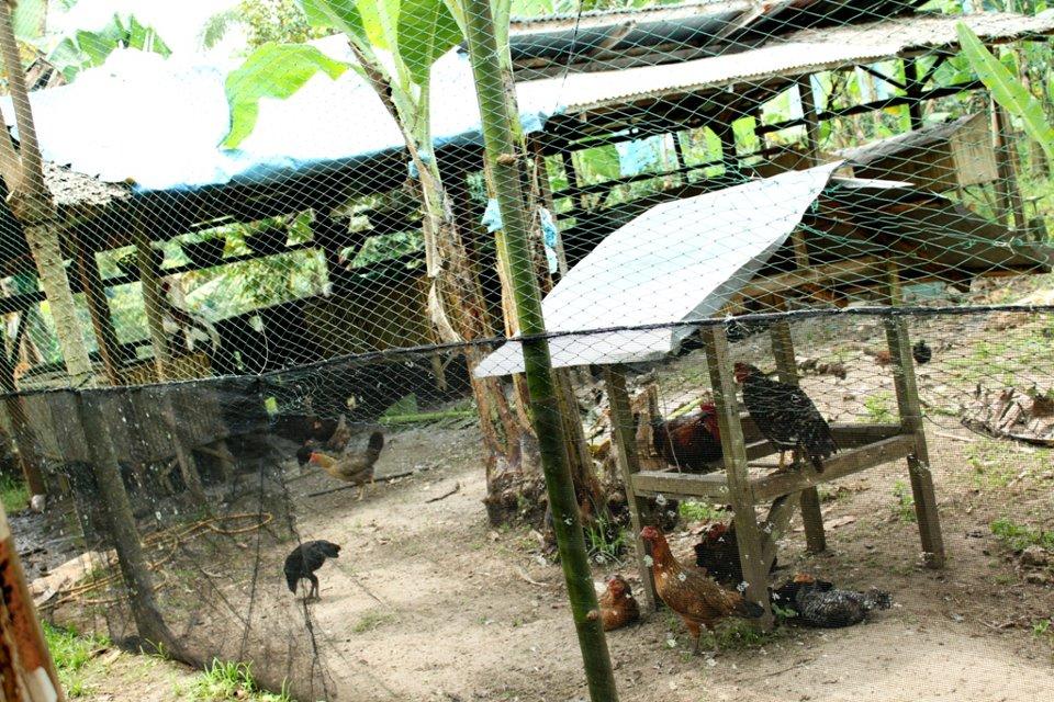 Goats House Cafe