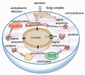 blogos metabolism vii the alchemistwe posit since ultimately all functions of the body, such as the production of various hormones and pheromones, the control of blinking etceteras,