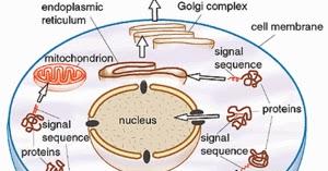 blogos metabolism vii the alchemistBlogos Metabolism Vii Control #7